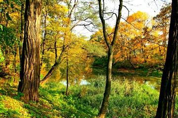 park, przyroda, drzewa, rośkinność , natura, strumyk, panorama, las, drzewostan,