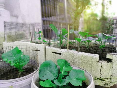 vegetable home planting