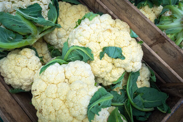 Cauliflower in the boxes. Cutted heads of cauliflower. Crop of vegetables. Harvest. Sale of agricultural products. Agricultural business.