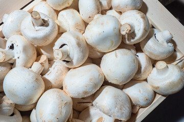 Champignons in a wooden box. White colour mushrooms. Growing champignons for sale. Sale of mushrooms.