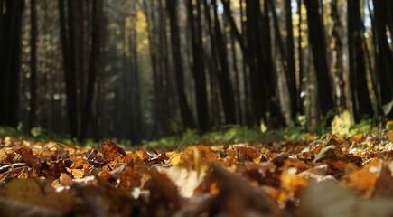 Sol recouvert de feuilles tombées, forêt, bois, arbres, végétation