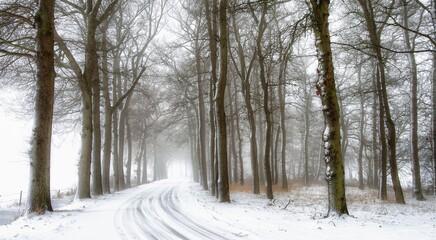 Route recouverte de neige, arbres, neige, végétation, sentier, hiver, froid, blanc