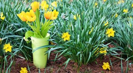 Photo sur Plexiglas Fleur Tulipes de printemps, fleurs, jaune, nature