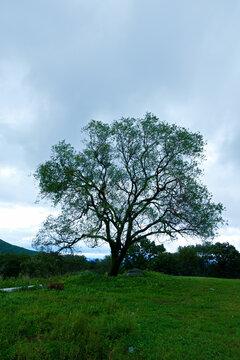 산 정상에 혼자 서있는 오래된 나무