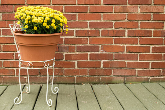 Pot of yellow mums on a porch with a brick background and room for copy to the rig