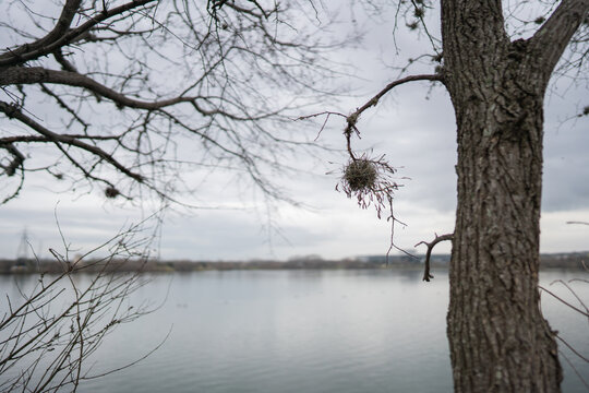 Tree on the river with branch in focus