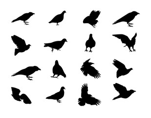 Black and white silhouette dove crow isolated. Vector Illustration