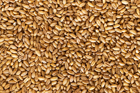 Brown wheat grains background or texture. Healthy food. Vegan nutrition.