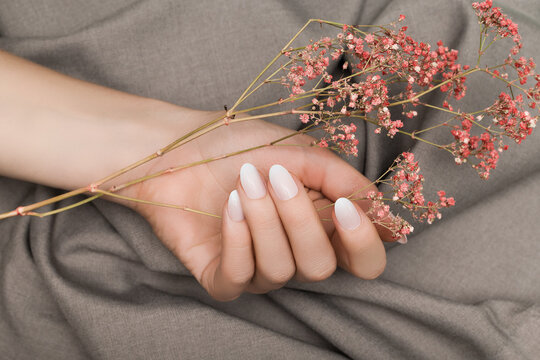 Female hand with white nail design. Female hand holding pink autumn flower. Woman hand on beige fabrick background