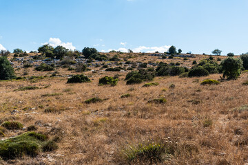 Landscape at the top of the mountain on a summer day with vegetation and trees and rocks with bright blue sky in Catalonia, Spain