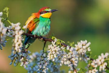 colorful wild bird among beautiful flowers
