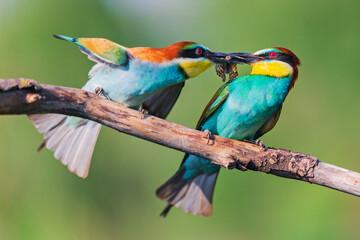 hot kiss of birds of paradise