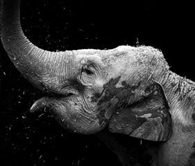 elephant in zoo