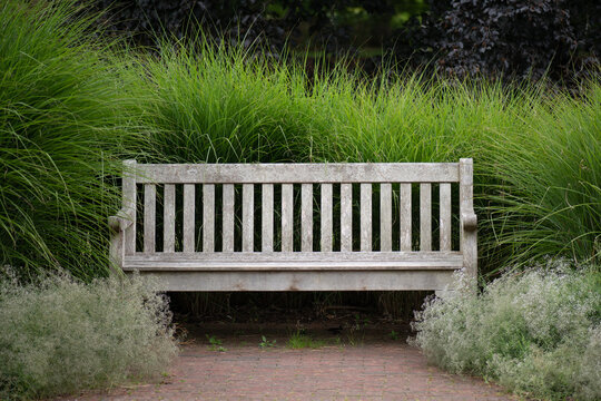 A secluded bench surrounded by tall grasses