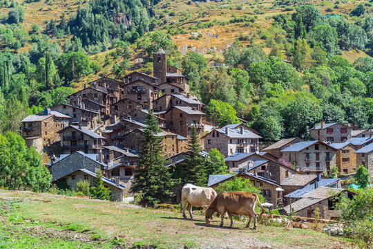 Os de Civís, Catalonia / Spain: Two cows grazing with the village in the background