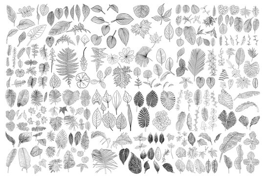 Tropical leaves collection. Isolated fern elements on white background. Set of jungle forest and domestic home leaf, exotic eucalyptus foliage, natural real live palm leaves, herbs drawing. Vector.
