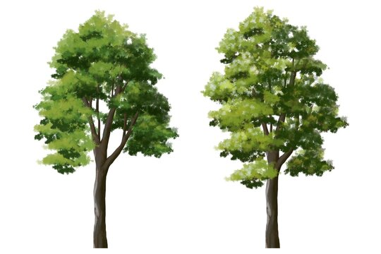 Set of watercolor tree side view for landscape and architecture elements