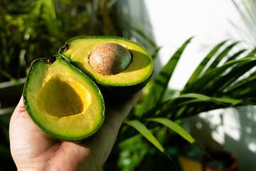 Owoc awokado, dwie połówki z pestką na jasnym tle, światło słoneczne.