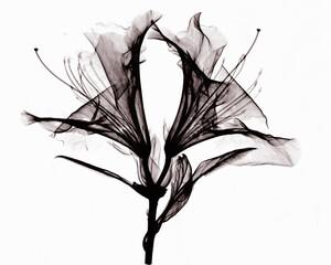 Image of azalea flowers