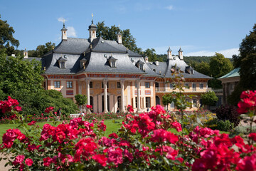 Pink roses and Pilnitz castle, Dresden, Germany
