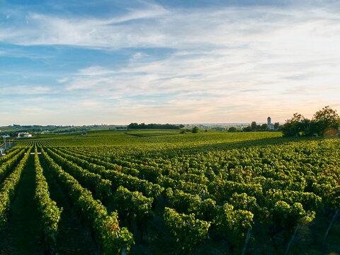 Vineyard, Bordeaux, France