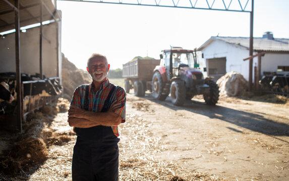 Portrait of senior farmer in cattle barn