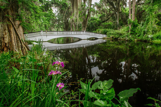 View of bridge over swamp in forest