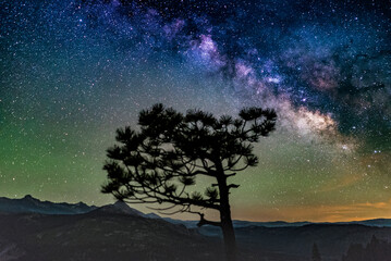 Scenic view of tree against starry sky