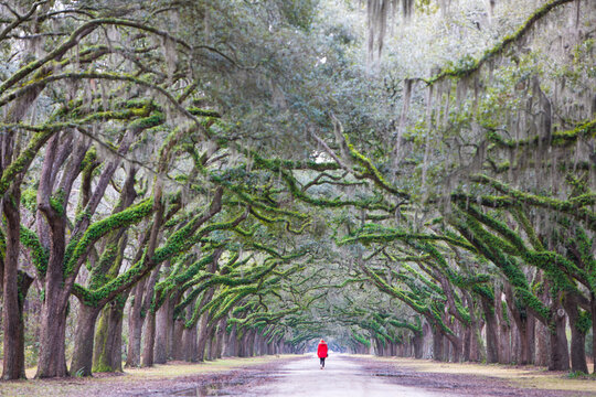 Rear view of man walking on tree lined road