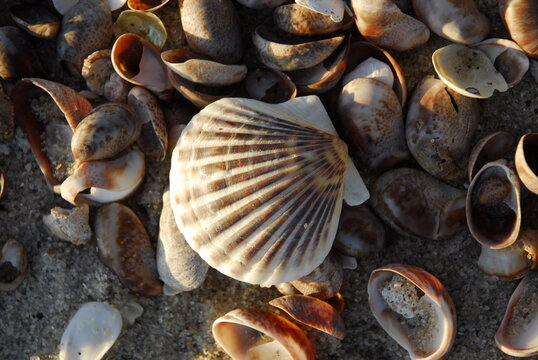Overhead view of shells on cape cod beach