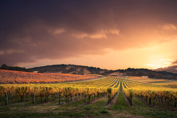 View of vineyard against sky during sunset