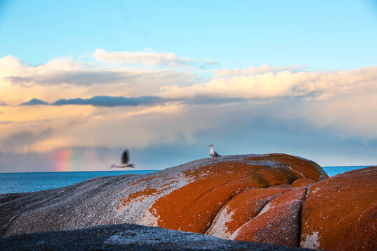 Scenic view of rainbow over Bay of Fires