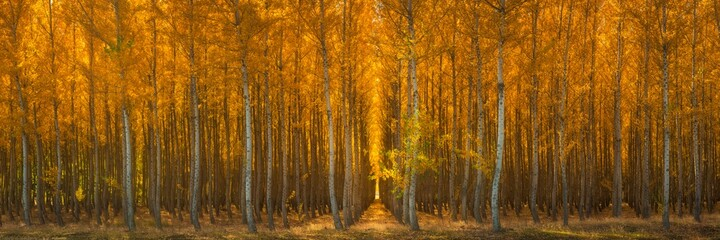 Scenic view of forest trees in autumn