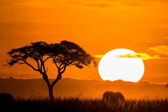Scenic view of sunrise in Amboseli National Park in Kenya