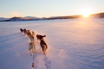 View of dog sled running on snowy landscape