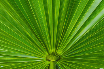Close up of tropical plant in the Florida Keys