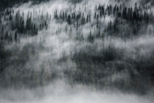 Scenic view of fog over forest