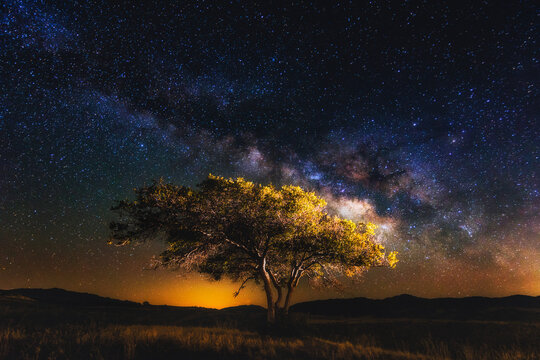 Scenic view of milky way over tree in field