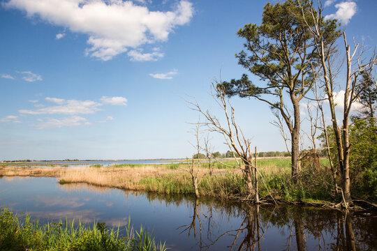 Scenic view of Prime Hook National Wildlife Refuge