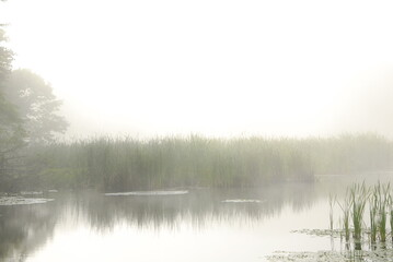Scenic view of fog over reeds growing in wetland