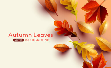 Autumn seasonal background frame with falling autumn leaves and copy space. Vector illustration