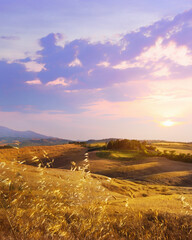 panoramic view of Italian Tuscany autumn landscape of yellow wheat field; agriculture farmland hills