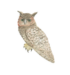Watercolor painting a owl isolated on white