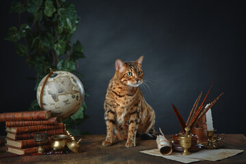Desktop of the sorceress McGonagall at Hogwarts school. She turned into a cat. Antique items, books and manuscripts on a dark background. Space for your text.