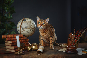 Bengal cat, vintage items, books and manuscripts on the table on a dark background. Space for your text. Concept of the Harry Potter universe