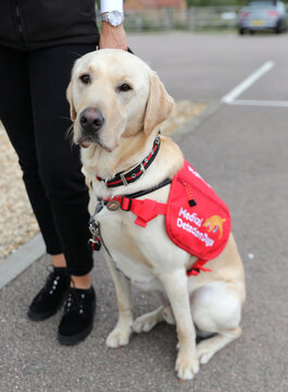 The Duchess of Cornwall visits Medical detection dogs training centre in Milton Keynes