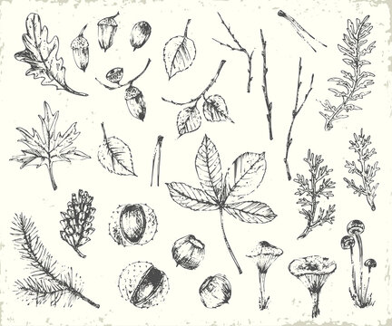 Hand drawn ink botanical illustration