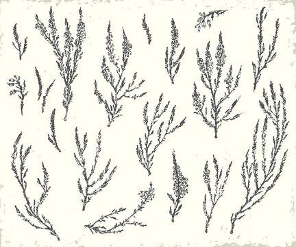 Hand drawn ink botanical illustration.