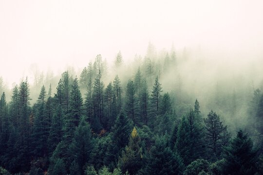 High Angle-photography of Green Foggy Forest Trees.