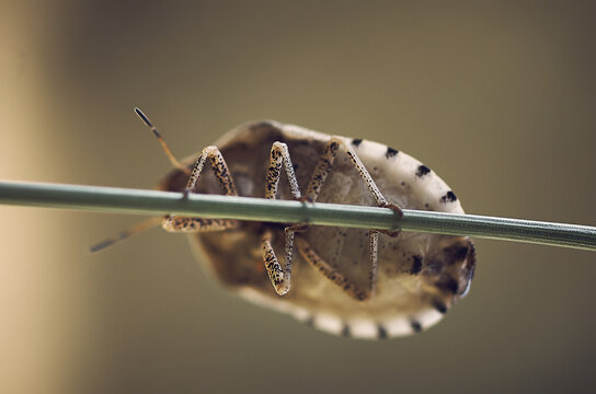 A bug holding a branch